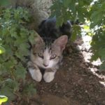 Autorizan a nueve voluntarias, y nueve suplentes, a alimentar las 95 colonias felinas de Toledo