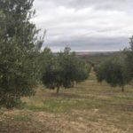 'Al Alma del Olivo': cuando producir en ecológico ya no es suficiente