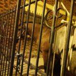 El año en el que los incendios en Toledo y Almorox pusieron la etiqueta de 'víctimas' a los grandes olvidados: los animales