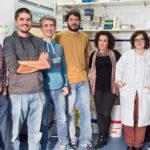 Parapléjicos pone en marcha un proyecto tecnológico de biomateriales para la lesión medular
