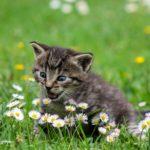 Barajan trasladar una colonia de gatos de Buenavista