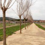 La Senda de las Moreras de la Vega Baja, seleccionada en la XI Bienal Internacional de Paisaje de Barcelona