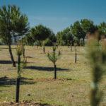 """Un bosque urbano de mil pinos en La Legua como """"nuevo pulmón verde"""" en Toledo"""