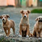 Dos mil firmas para evitar que el Ayuntamiento de Ugena desaloje a la protectora de animales