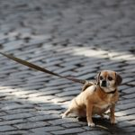 Detenido en Talavera por forzar vehículos para robar mientras fingía pasear a su perro