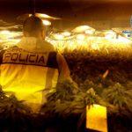 Tres detenidos y más de mil plantas incautadas en Talavera