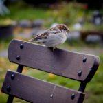 Casasbuenas y Lagartera, entre los municipios que más aves han registrado en el maratón ornitológico desde casa