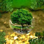 Es momento de replantear nuestra relación con la naturaleza