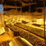 Desmantelado un laboratorio dedicado al cultivo ilegal de marihuana asentado en la localidad de Layos