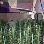 Detenido por ocultar una plantación de marihuana en un local de ocio en Yuncler…hasta en el aseo