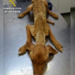 Rescatan a más de 40 perros en grave estado de desnutrición y deshidratación en Quintanar de la Orden