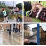 Achiques, caídas de árboles o el rescate de un gato ciego: el temporal deja casi 50 incidencias en la provincia