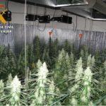 El apagón eléctrico en una urbanización de Yuncos deja al descubierto medio millar de plantas de marihuana
