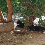 Detienen a una mujer como presunta autora de la muerte a golpes de una cría de gato en el cementerio de Toledo