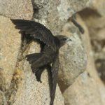 En Castilla-La Mancha la biodiversidad no es solo hablar de linces
