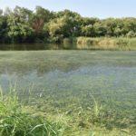 Talavera vuelve a pedir a la CHT la limpieza de algas en el río Tajo