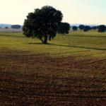 Los arquitectos plantean media docena de propuestas para configurar la Ley de Paisaje de Castilla-La Mancha