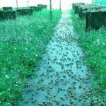 Una granja de caracoles en Mejorada, entre los destinos de los 'erasmus agrarios'