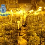 La Policía Nacional desmantela en El Casar de Escalona dos plantaciones indoor de marihuana