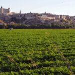 Huerta del Rey, Safont y alta velocidad Toledo-Oropesa