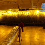 El foso de un taller o una nave de ropa usada, entre los cultivos con más de 7.000 plantas de marihuana en el Polígono industrial