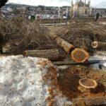 'Filomena' causó destrozos estimados en 13 millones en Toledo y dañó unos 400.000 árboles de la ciudad