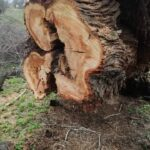 """Denuncian la """"poda indiscriminada"""" de árboles en el parque Safont de Toledo por los daños del temporal"""