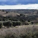 """Vecinos de Méntrida se oponen a dos megaproyectos fotovoltaicos: """"Es un ataque al medio ambiente y a la agricultura"""""""