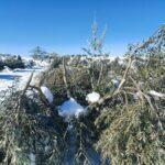 'Filomena' daño más de 5.000 hectáreas de cultivos en la provincia de Toledo, la mayoría de ellas de olivar