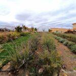 El vivero de Villacañas produce más de 29.000 plantas para recuperar la flora del agrosistema manchego