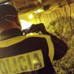 Una operación policial acaba con 12 detenidos que gestionaban varios cultivos de marihuana en la provincia