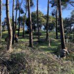 Comienzan los trabajos selvícolas en los montes públicos de Los Gavilanes para adecuar la zona tras 'Filomena'