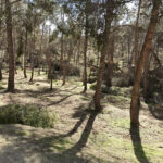 Las ramas y árboles que dañó Filomena servirán de combustible para instalaciones municipales como las piscinas cubiertas