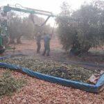 Detenidas dos personas por un supuesto caso de explotación laboral en el sector agrícola