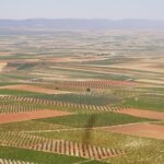 La provincia de Toledo perdió casi diez millones de euros en la exportación de vino en 2020 respecto al año anterior