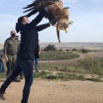 VÍDEO | Liberan a un águila imperial ibérica recuperada en el CERI de Sevilleja de la Jara