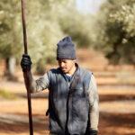 La cosecha de la DO Montes de Toledo, agraviada por 'Filomena', finaliza con 18.000 toneladas de aceituna recogidas