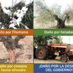 Convocan una caravana en Toledo para reclamar soluciones a los daños de la borrasca 'Filomena' y los conejos