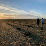 La DO Méntrida elude posicionarse sobre las megaplantas fotovoltaicas previstas en el municipio