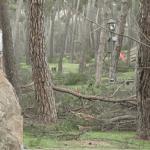 """350.000 euros para adecuar los pinares de la A-42 con """"graves"""" desperfectos debido al temporal Filomena"""