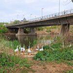 ¿Sabías que el pan no es una buena alimentación para los patos, mata a los peces y contamina el agua?