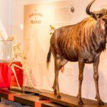 El Museo de Ciencias Naturales de Los Yébenes reabre sus puertas con entrada gratuita