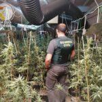 Desmantelan una plantación indoor en una nave industrial con más de 600 plantas de marihuana en Los Navalucillos