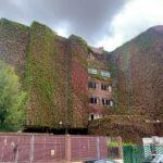 """Peligra un jardín vertical con décadas de crecimiento y un elemento """"singular"""" en el urbanismo de Talavera de la Reina: """"Es una barbaridad"""""""