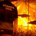 La Guardia Civil desmantela tres plantaciones de marihuana y detiene a seis personas en la localidad de Domingo Pérez