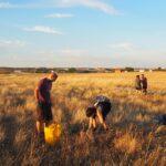 El Proyecto Germen vuelve a echarse al campo para mantener viva la Cañada Real Segoviana