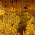 Desmantelada una nueva plantación 'indoor' de marihuana en San Martín de Pusa