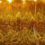 Tres detenidos tras desmantelar dos plantaciones de marihuana en La Mata, una de ellas videovigilada