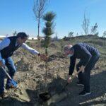 Comienza la plantación del 'Bosque Albia', el futuro «pulmón verde de Illescas»