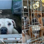 La Guardia Civil rescata a dos perros abandonados que deambulaban por Escalona